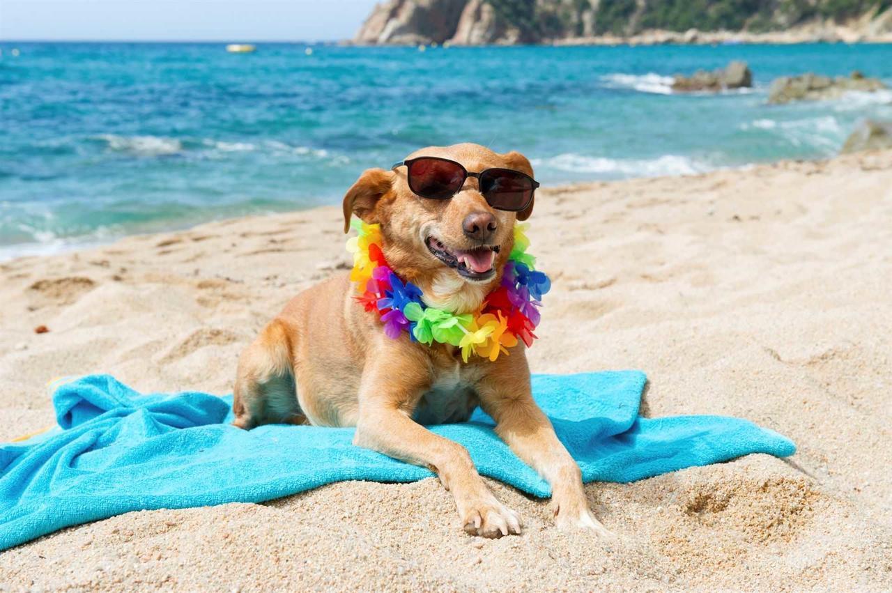 Смешные пляжные картинки, днем учителя