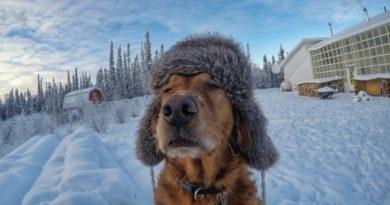Мы живём в самой холодной стране мира. Но знаете ли вы, насколько она холодна?
