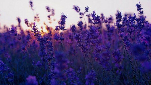 10 природных ароматов, которые меняют настроение