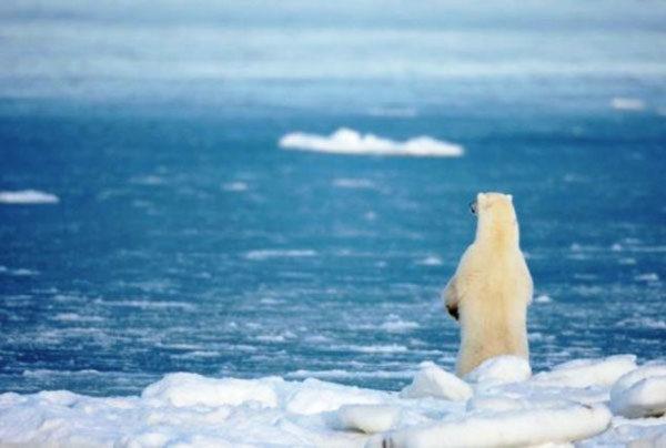 Чем отличается Арктика от Антарктики и Антарктиды и что у них общего?