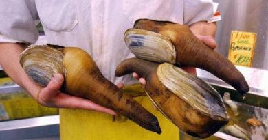 Геодак: факты о необычном моллюске