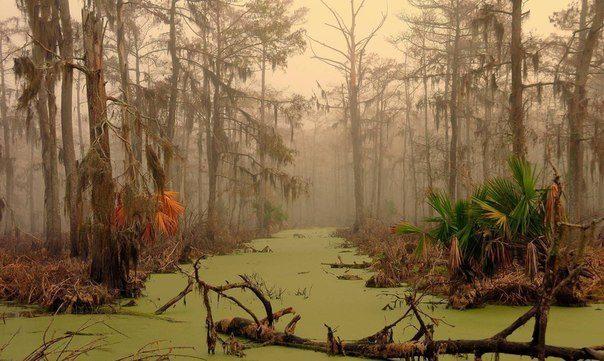Можно ли выбраться из болота, которое тебя засасывает?