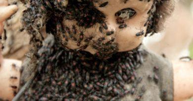 Остров кукол - ужасная достопримечательность Мексики
