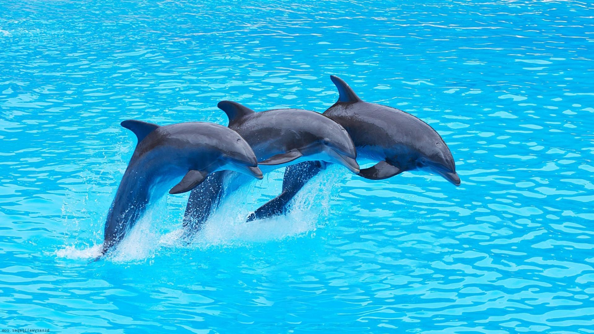 того, обои на рабочий стол океан дельфины далеко последняя необычность
