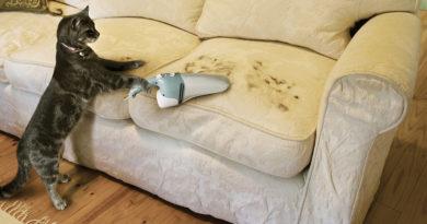 Как очистить одежду и мягкую мебель от шерсти животных?