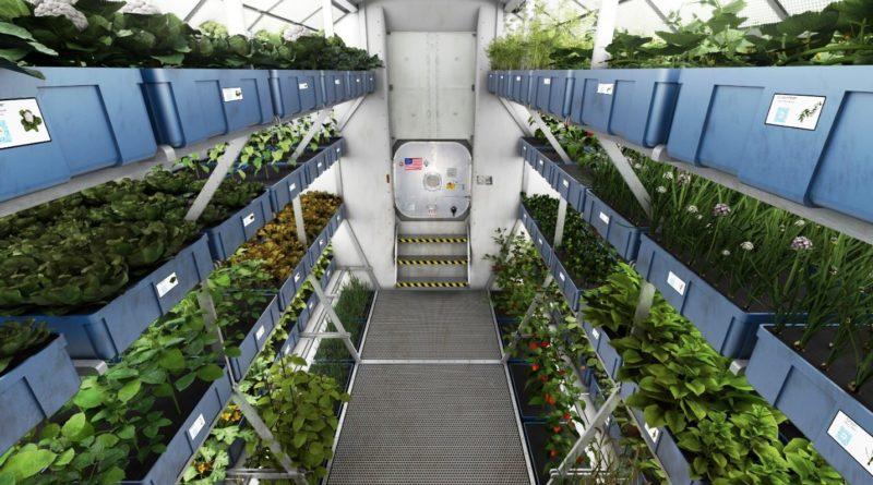 НАСА инициировало проект по выращиванию растений в космосе