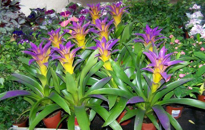 Одно из самых любимых комнатных растений