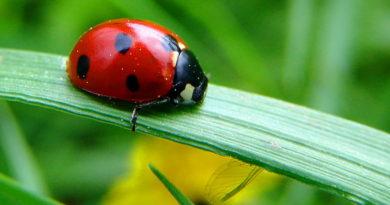 Полезные обитатели вашего сада!!! божьи коровки, муравьи, пауки, лягушки