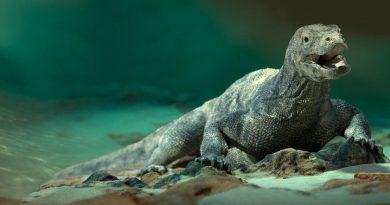 Океанариумы и аквариумы: самые грандиозные на планете