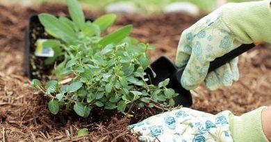 Укрывные материалы пригодятся вам на садовом участке круглый год