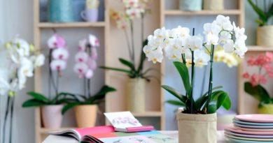 Фен — шуй для комнатных растений
