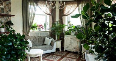 Комнатные растения для темной квартиры