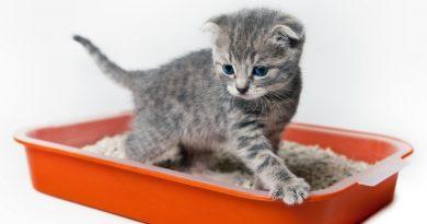 Как приучить котенка к туалету?