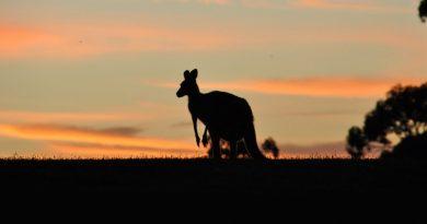 5 разрушенных мифов об Австралии