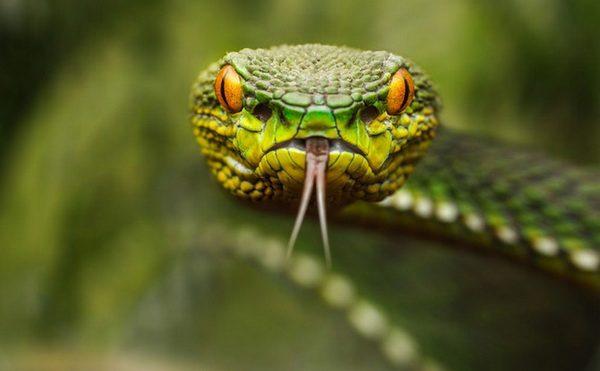 В Новой Зеландии змеи полностью запрещены