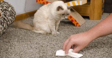 Как убрать запах мочи кота?