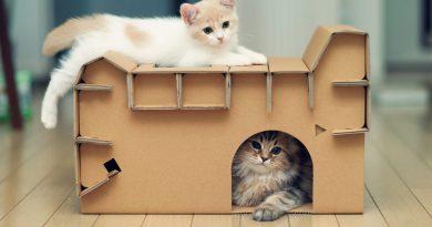Для чего нужны в доме кошки?