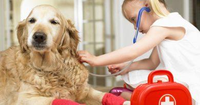 Отравление у домашних животных — как помочь?