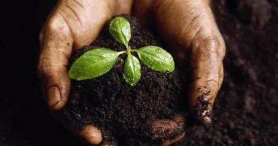 5 Натуральных удобрений для домашних цветов