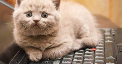 Почему кошки любят клавиатуры?