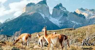 Как путешествовать по Патагонии