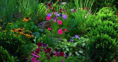 Выбираем самые ароматные растения для цветников