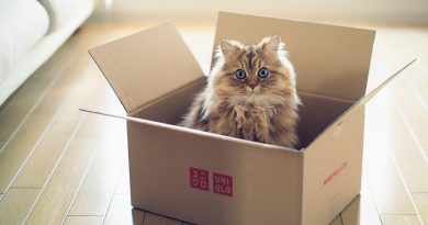 Кошка в новом доме