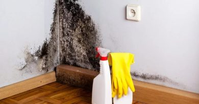 16 способов избавиться от плесени в квартире ил доме