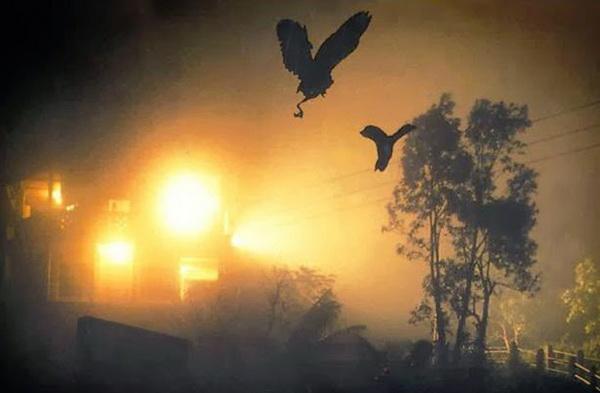 Тысячи птиц ежегодно летят умирать в Долину орхидей