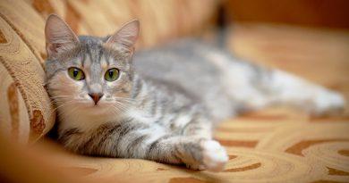 Для чего нужны кошки в доме?