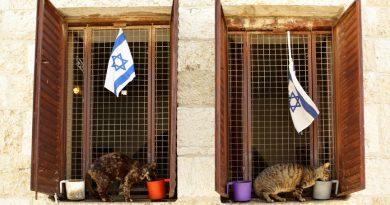 Найди кота: 7 курортов, где боготворят усатых‑полосатых