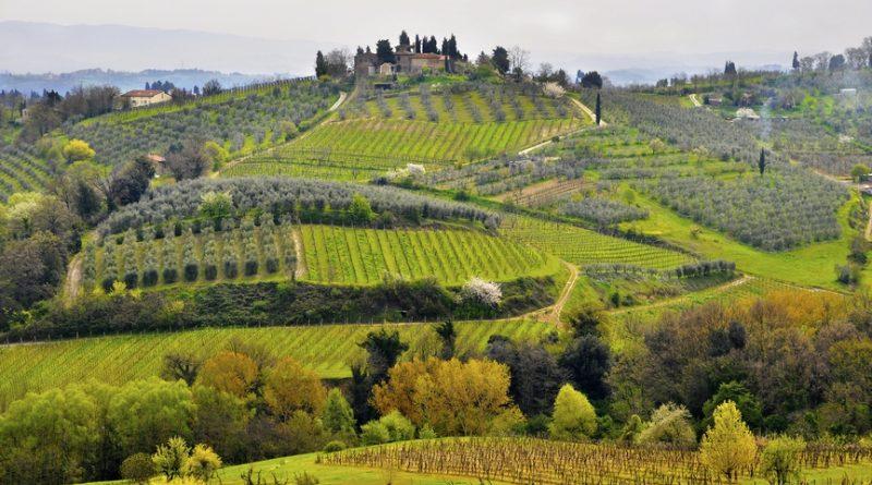 Под градусом: 5 лучших винодельческих регионов Европы