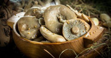 Засолка грибов - холодный способ
