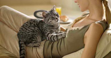Почему котики топчут нас лапками?