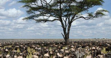 10 самых интересных национальных парков Африки