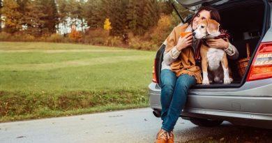 7 правил путешествий с животными