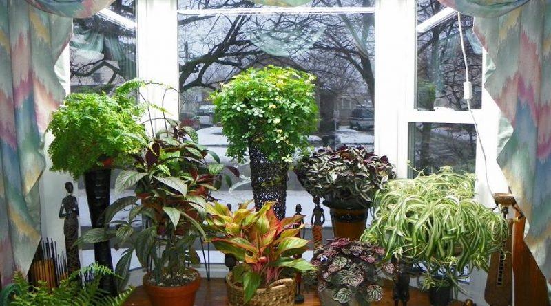 Какие растения в каком помещении лучше выращивать?