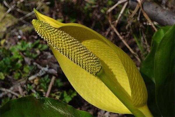 Природа предупреждает: некоторые растения влекут за собой смерть!