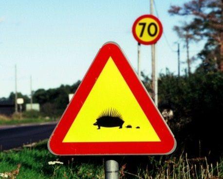 Самые необычные дорожные знаки в мире
