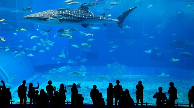 5 главных океанариумов планеты