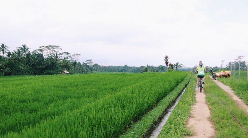 Что сделать на Бали