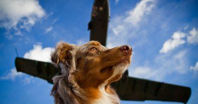 Авиатранспорт: путешествия с животными