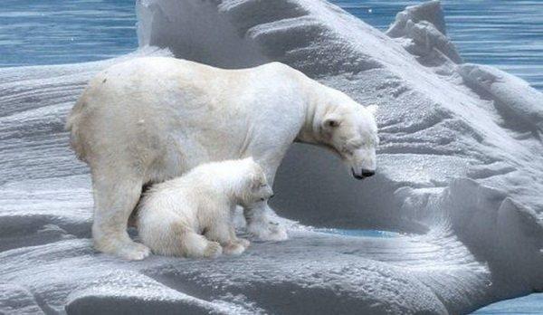Что будет с Землёй, если растают полярные ледяные щиты