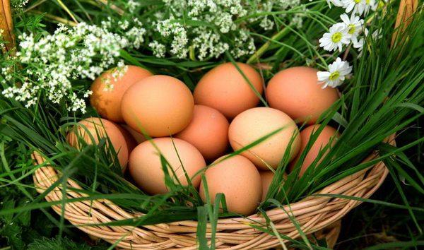 Интересные факты о курином яйце