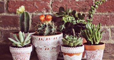 Комнатные растения в доме создают особую атмосферу