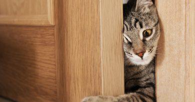 Почему кошка просит открыть дверь, но не заходит?