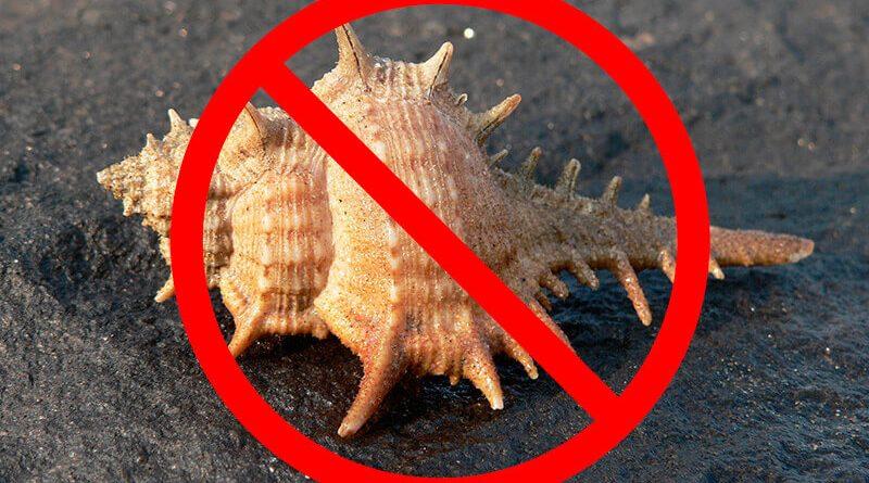 В каких странах строго запрещено вывозить ракушки и что грозит за нарушение запрета