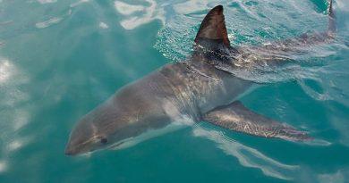 Насколько реально столкнуться с акулой туристу на пляжном отдыхе