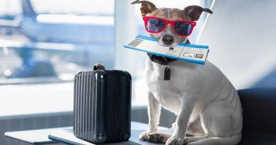 Что нужно знать о новых правилах перевозки животных Аэрофлотом