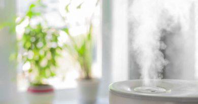 10 растений, повышающих влажность воздуха в квартире